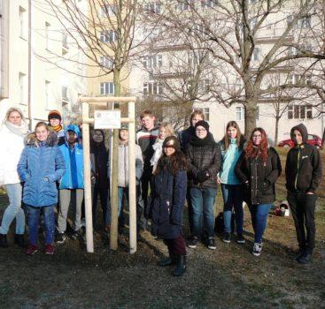 Žáci a pracovníci školy zasadili lípu na počest 100. výročí naší republiky – ZŠ J.Seiferta
